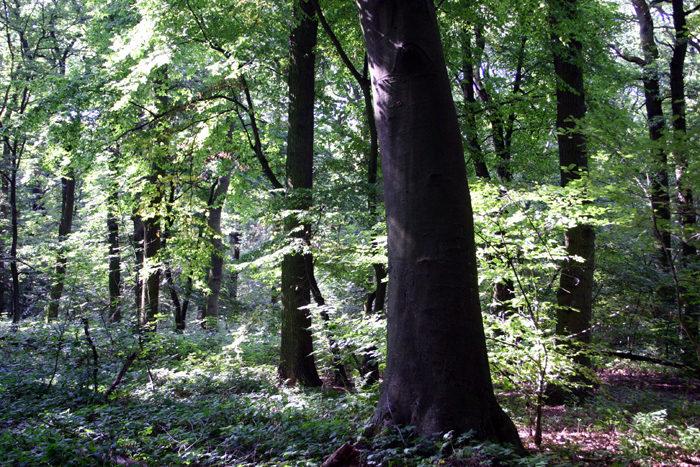 Hambacher Wald. Foto: Dirk Jansen